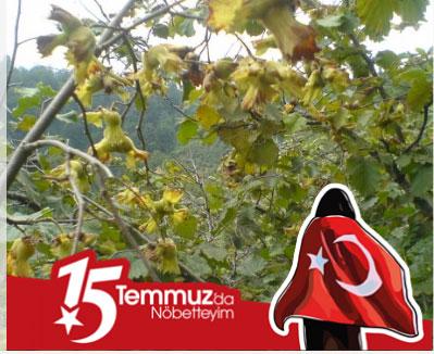 facebook 15 emmuz profil fotoğrafı